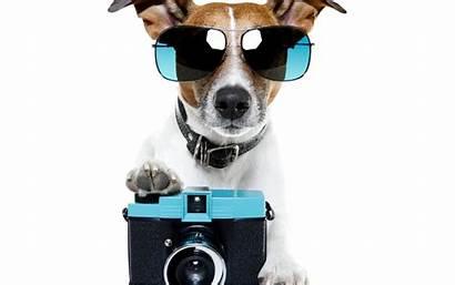 Summer Desktop Say Dog Wallpapers Dogs Background
