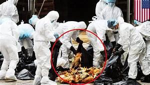 Bird Flu In America  33 Million Birds Killed Or To Be