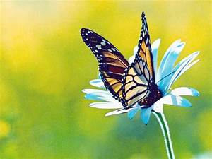 7art Butterfly screensaver. Slideshow screensaver with ...