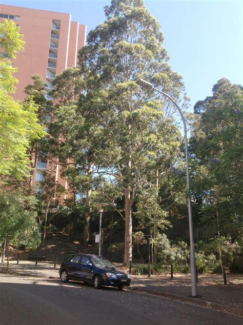 carmichael park significant trees
