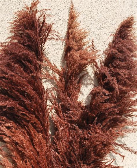 dried pampas grass  decorating easy  drieddecor