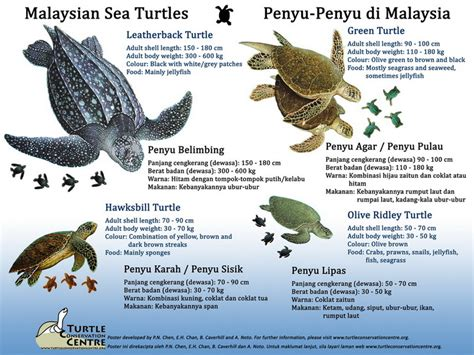 Introduction To Sea Turtles
