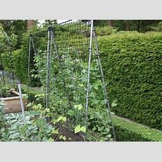Garden Climbing Plant Supports Indoor Plants For Plant