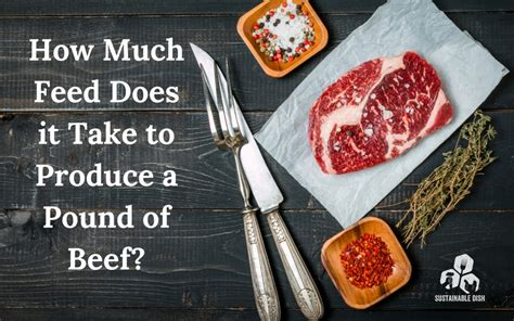 How Much Feed Does It Take To Produce A Pound Of Beef