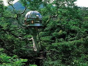 Miscellaneous : Tree House Amazing With Glass Dome Tree ...