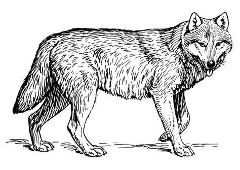 Ausmalbilder elefant zum ausdrucken kostenlos. Wolf Ausmalbilder Zum Ausdrucken : Wolf 2 Ausmalbilder Fur ...