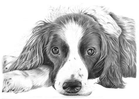 pencil drawings  dog  puppies     sale