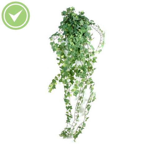 plante verte retombante d interieur digpres