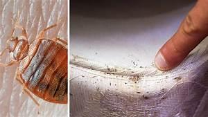 Fumigène Punaise De Lit : punaises de lit la couleur de vos draps vous aide les viter ~ Melissatoandfro.com Idées de Décoration