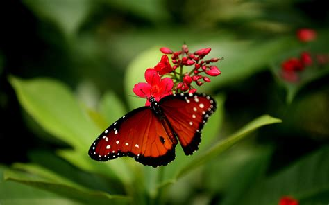 Be inspired by the beauty of nature with this gorgeous collection of flower wallpapers and images. Beautiful Butterflies and Flowers Wallpapers (56+ images)