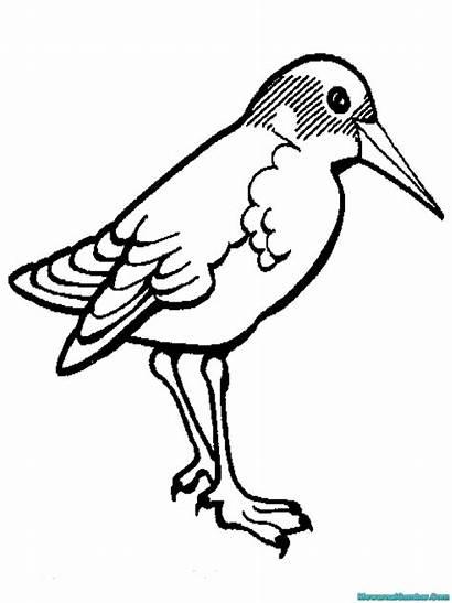 Burung Gambar Mewarnai Untuk Diwarnai Puyuh Contoh
