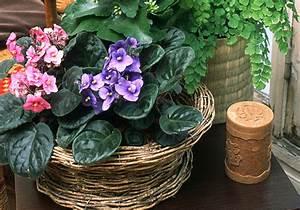 Bouture Plante Verte : la bouture du saintpaulia ~ Melissatoandfro.com Idées de Décoration