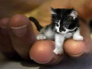 Worlds Smallest Cat Guinness World Record Holder - YouTube