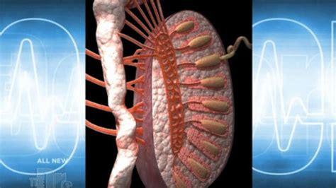 testicular pain  doctors tv show