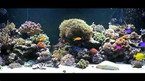 fond ecran aquarium anime gratuit fond ecran gratuit anime aquarium 28 images fond d 233 cran pc aquarium anime gratuit