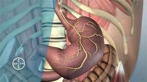 How does the Stomach Function? - YouTube  Stomach