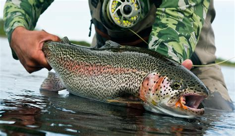 Flies That Catch Big Trout, The Truth Might Surprise You