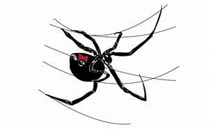 How to Draw a Black Widow Spider – Sketchbook Challenge 21 ...