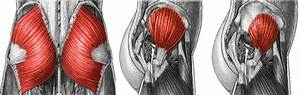 3 Reasons Strong Glutes Are Important