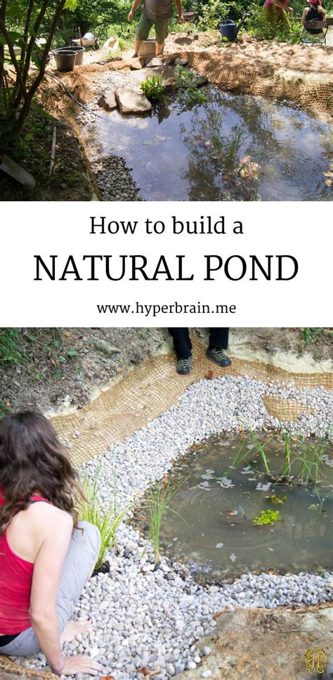 build  natural pond hyperbrainme