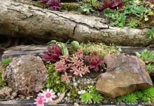 gartengestaltung neue ideen ideen gestaltung steingarten beste garten ideen