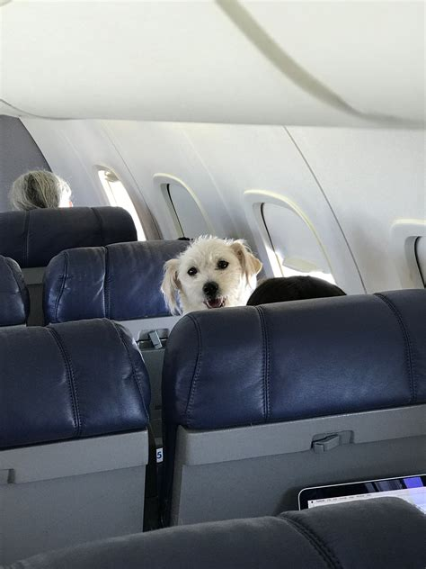 airline review contour airlines baltimore washington