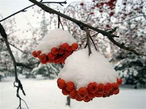 Information About Beautiful Snow Scenery Wallpapers