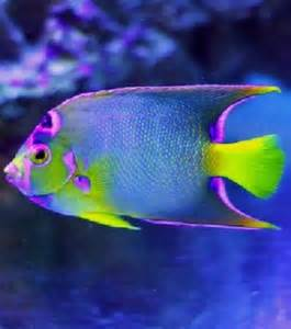 Beautiful Pretty Fish