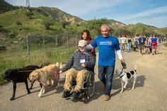 cesar millans dog training  dpc images