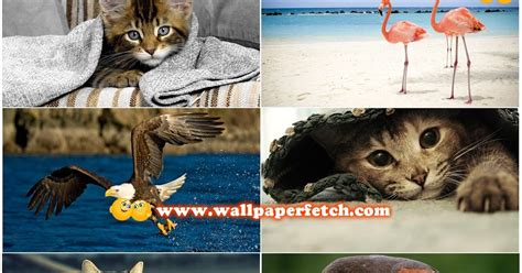 Wallpaper Hd Animals Wallpaper Pack - wallpaper fetch beautiful animals hd wallpapers pack 2