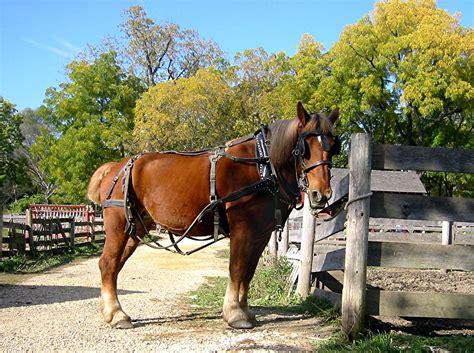 horse farm farms navigation posts