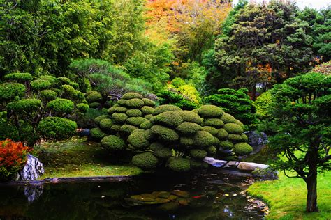 japanese garden design with koi fish pond decorate with