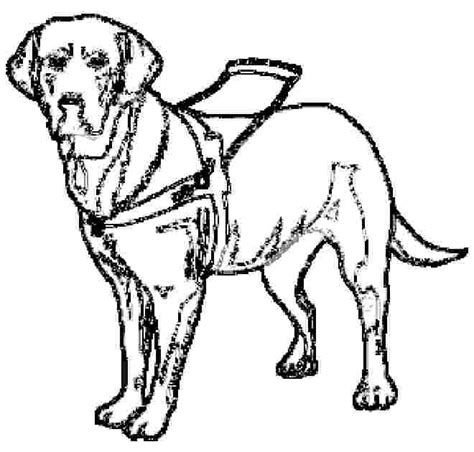 guide dog coloring pages  daniel inquiry project dogs