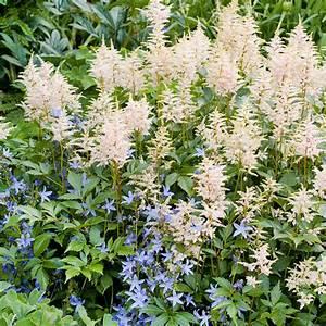 Blumen Im Garten : blumen im garten gartenideen f r reizvolle und attraktive gestaltung ~ Bigdaddyawards.com Haus und Dekorationen