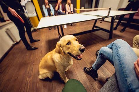 Dzīvnieki birojā veicina veselīgus paradumus - InCSR - InCSR
