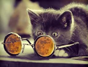 Awesome Cool Cat Backgrounds
