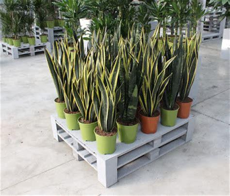 pot plastik cantik minimalis jual pot bunga minimalis tanah liat dan pot gantung murah berbagi tips dan trik terbaru
