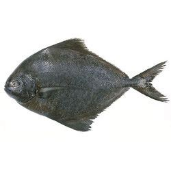 pomfret fish  kochi latest price mandi rates