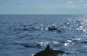 Dolphin Spinner GIF - Find & Share on GIPHY