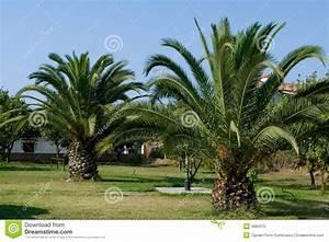 Palmier De Jardin : jardin de palmier photo libre de droits image 4884315 ~ Nature-et-papiers.com Idées de Décoration