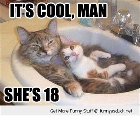 Sexy Cat Memes - funny monkey memes it s cool man funny as duck funny pictures funny animals pinterest