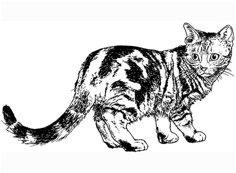 cat coloring pages cat dog coloring page cat coloring