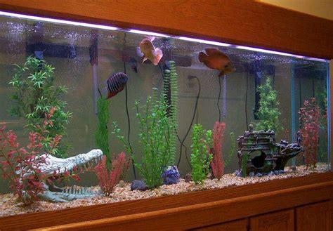 maynardwixs freshwater tanks photo id  full