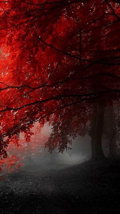 1080 1920 Mobile Tree Foggy Nature Pixelstalk