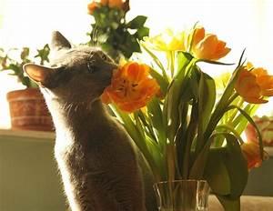 Welche Pflanzen Sind Nicht Giftig Für Katzen : fr hlingsblumen giftig f r katzen interessantes f r katzenfreunde ~ Eleganceandgraceweddings.com Haus und Dekorationen