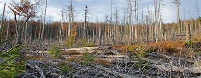 Acid Rain Earth Planet Organizations Learn
