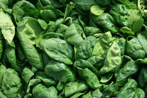 Wie Tief Wurzelt Rasen by Spinat Informationen