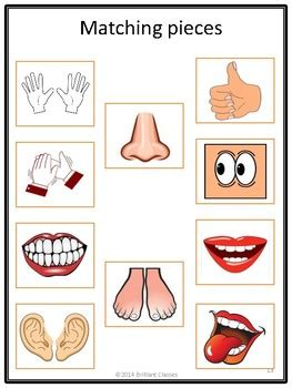 adapted task card book  pre   kgmy body parts tpt