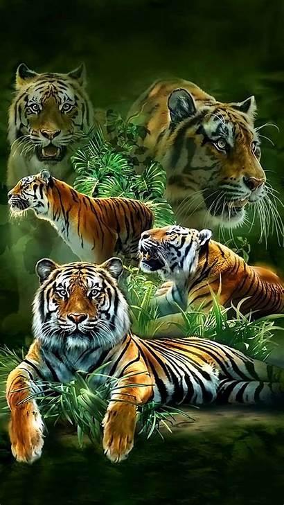 Tiger Tigre Tigers Cubs Cats Animals Handy