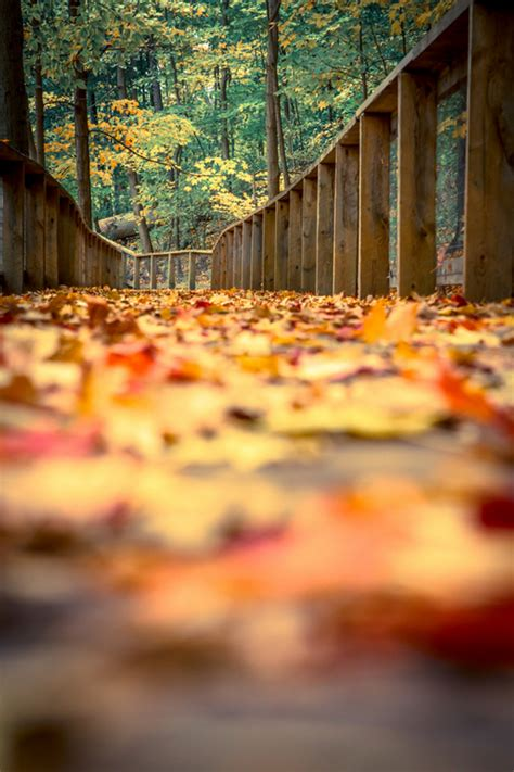 crisp fall leaves pictures   images